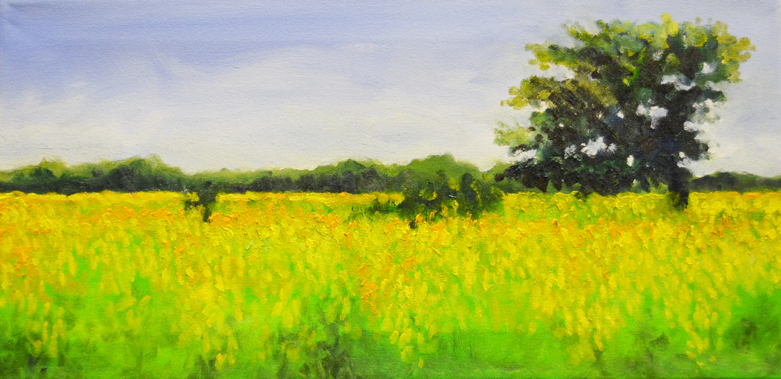 Mustard Fields of India, oil on canvas painting by Dale Sprague